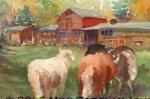 Ian\'s Sheep (Salt Spring Island, BC)