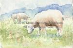 Sheep-Ewe Ram Ewe